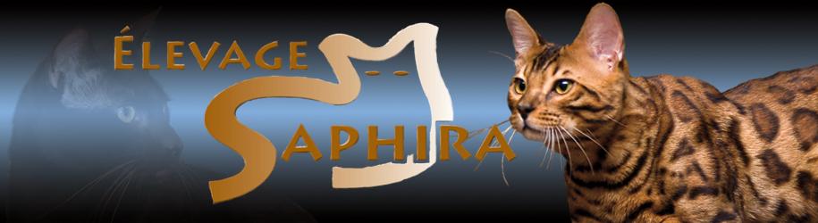 Élevage Saphira Bengals et Havana Brown