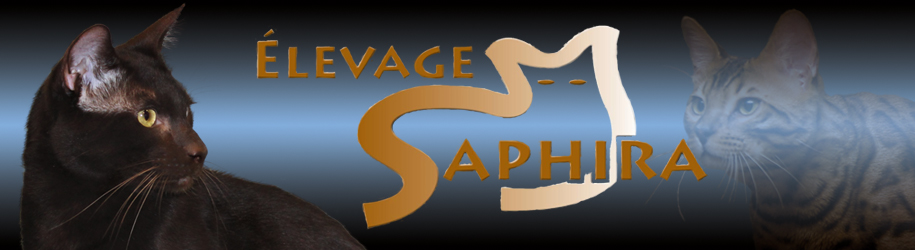 Élevage Saphira Havana Brown