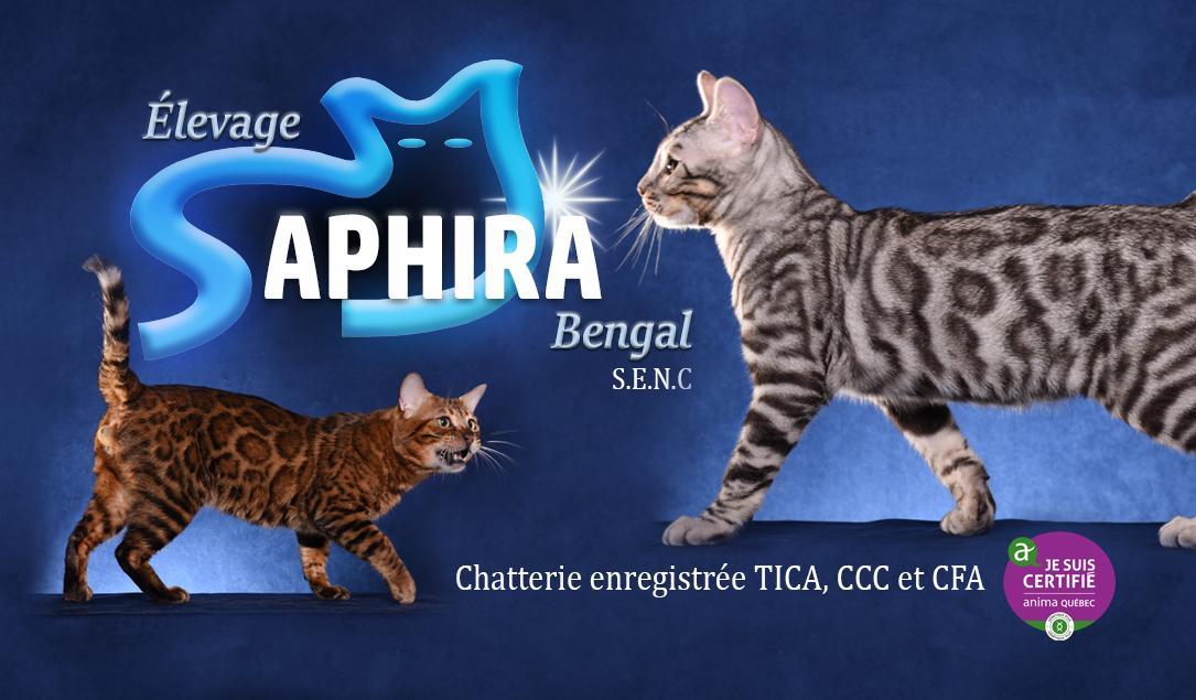 Saphira Bengal