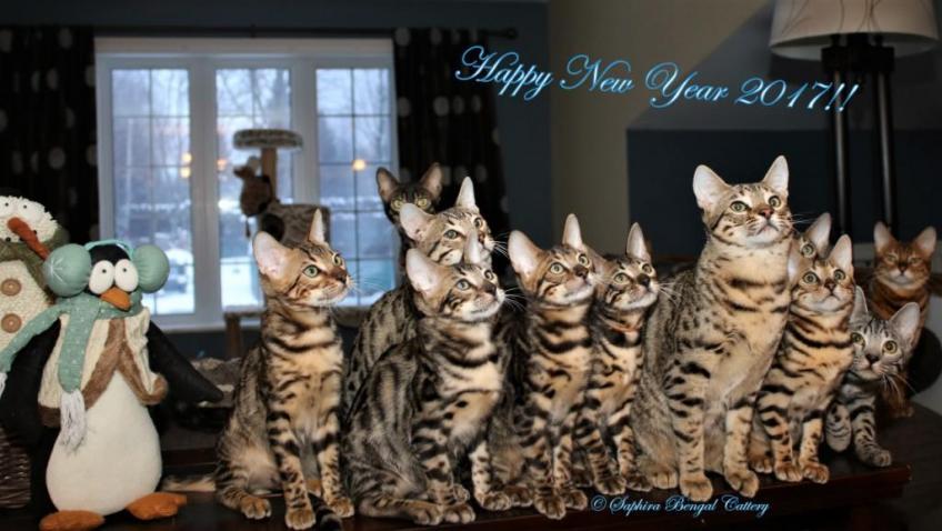 Happy New Year 2017!!  :)
