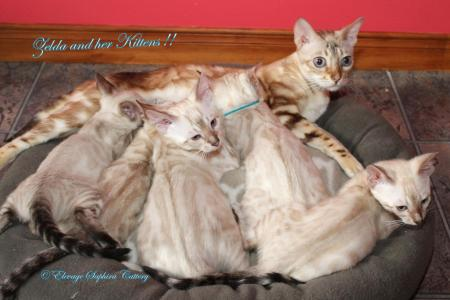 Zelda and her kittens