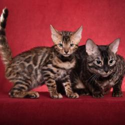 Leila et son Chaton