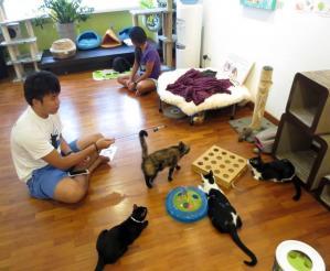 Singapore Cat Museum